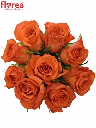 Kytice 9 oranžových růží PATZ 60cm
