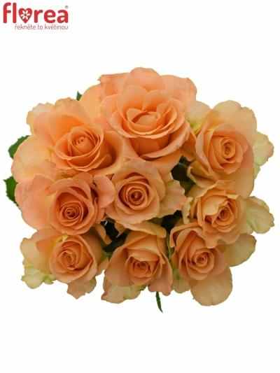 Kytice 9 oranžových růží TRIXX! 50cm