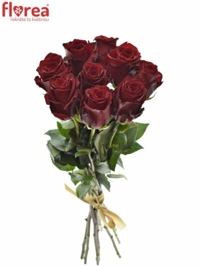 Kytice 9 rudých růží EXPLORER 60cm
