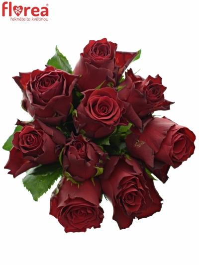 Kytice 9 rudých růží MADAM RED 50cm