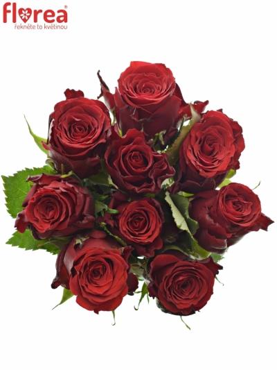 Kytice 9 rudých růží RED TORCH 60cm
