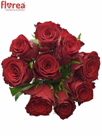 Kytice 9 rudých růží RHODOS 40cm