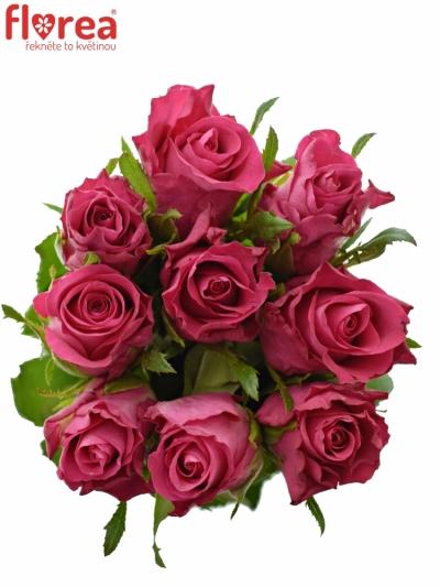 Kytice 9 růží ORCHESTRA 40cm