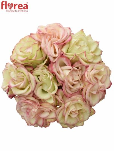 Kytice 9 růžových růží  CAROUSEL ILLUSION 50cm