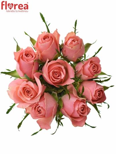 Kytice 9 růžových růží ACE PINK 50cm