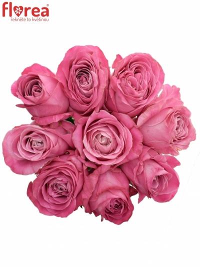 Kytice 9 růžových růží ALL 4 LOVE+