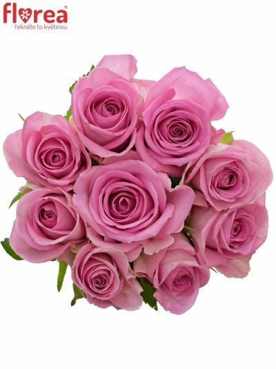 Kytice 9 růžových růží AQUA 55cm