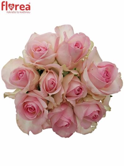 Kytice 9 růžových růží AVALANCHE SORBET+