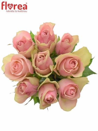 Kytice 9 růžových růží BELLE ROSE 50cm
