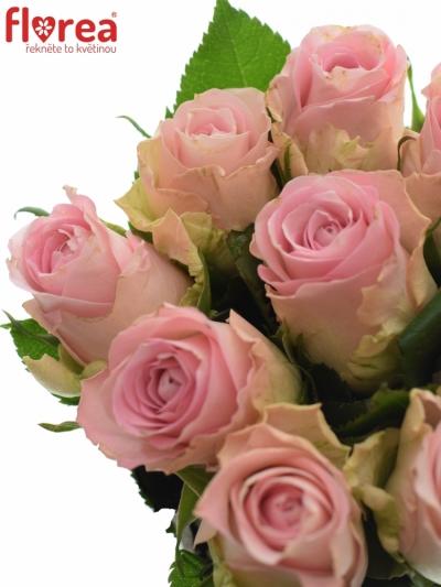 Kytice 9 růžových růží BISOU 50cm