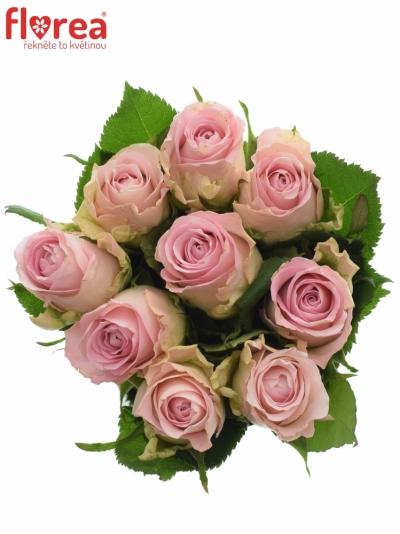 Kytice 9 růžových růží BISOU 60cm