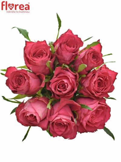 Kytice 9 růžových růží CANDIDATE!