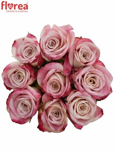 Kytice 9 růžových růží CLASSY ALISON