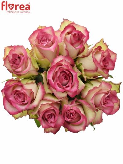 Kytice 9 růžových růží E-VENT 50cm