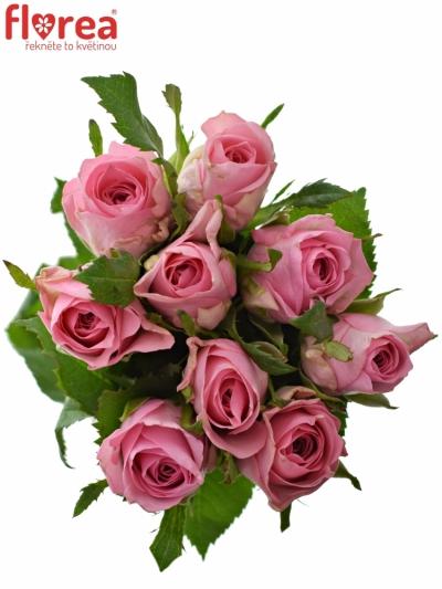 Kytice 9 růžových růží ELIZA 50cm