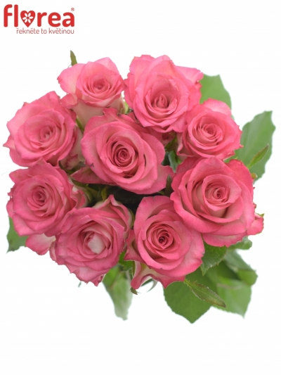 Kytice 9 růžových růží ENSEMBLE 50cm