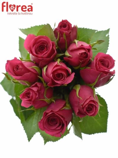 Kytice 9 růžových růží FUCHSIANA 60cm