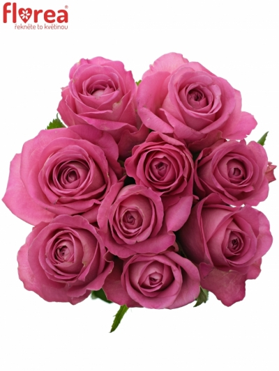 Kytice 9 růžových růží H3O 40cm