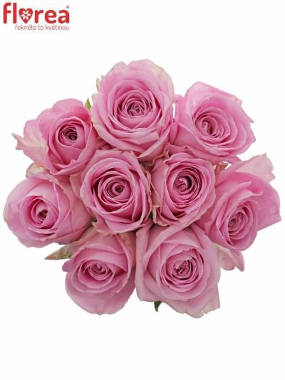 Kytice 9 růžových růží HEIDI!