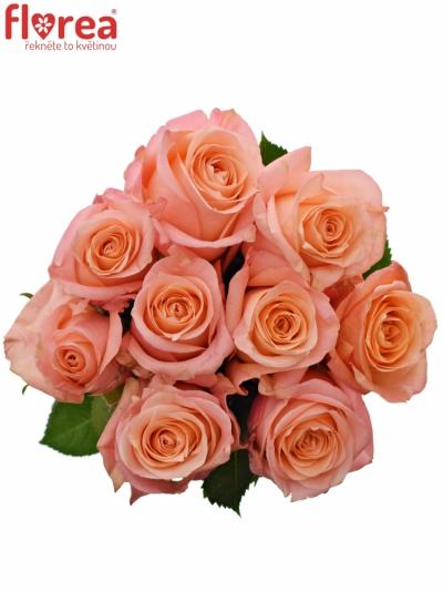 Kytice 9 růžových růží LADY MARGERAT 50 cm