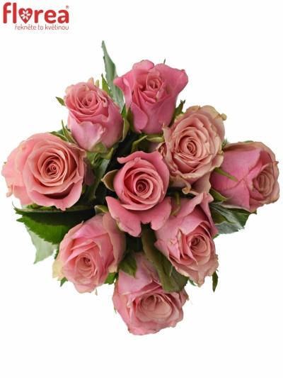 Kytice 9 růžových růží LIGHT PINK TACAZZI+ 40cm