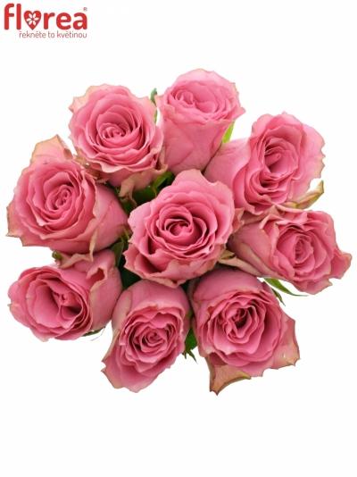 Kytice 9 růžových růží LOVELY RHODOS