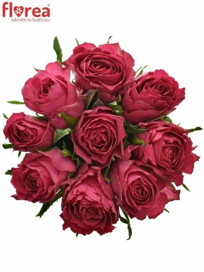 Kytice 9 růžových růží MADAM CERISE