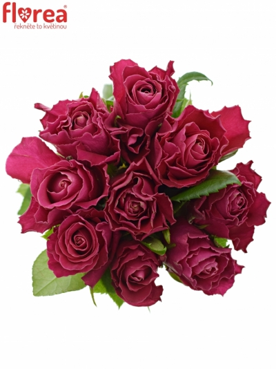 Kytice 9 růžových růží MOVIE STAR 40cm