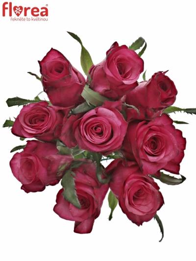 Kytice 9 růžových růží NATURES WILD