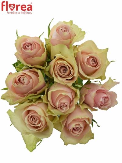Kytice 9 růžových růží PINK ATHENA 50cm
