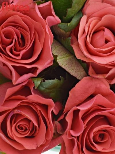 Kytice 9 růžových růží PINK TACAZZI
