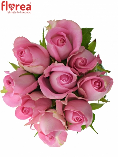 Kytice 9 růžových růží REVIVAL 50cm