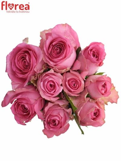 Kytice 9 růžových růží SHANGHAI LADY 40cm