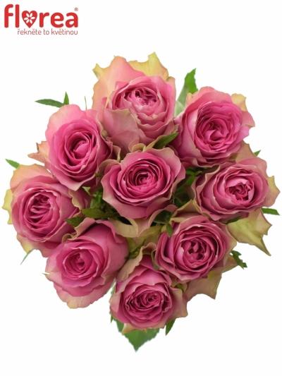 Kytice 9 růžových růží SHIARY 50cm