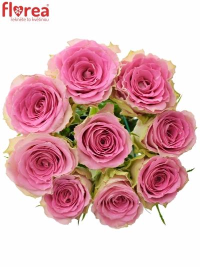 Kytice 9 růžových růží TIMES SQUARE