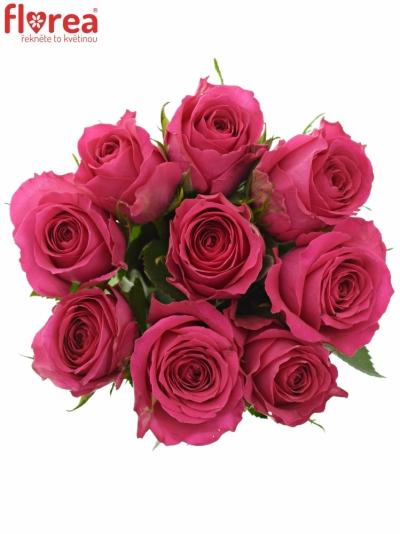 Kytice 9 růžových růží WINK 60 cm