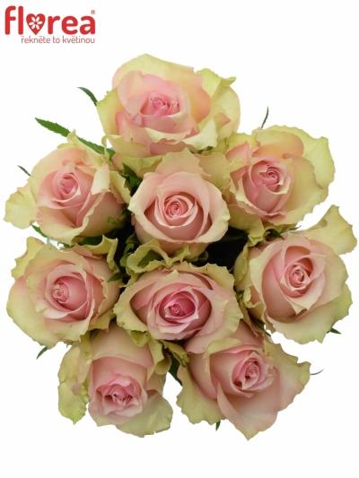 Kytice 9 smetanových růží DREAMLAND 60cm