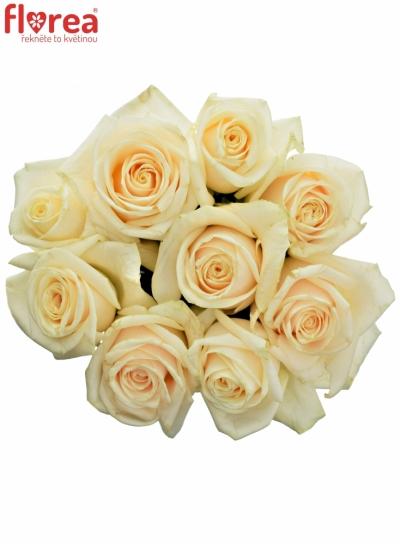 Kytice 9 smetanových růží VENDELA