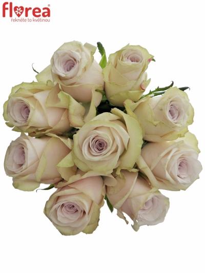 Kytice 9 světle fialových růží SILVERY FLAME 35cm