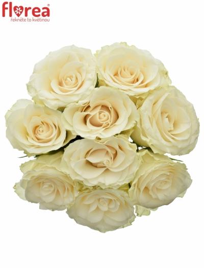 Kytice 9 světlekrémových růží SOLSY 60cm