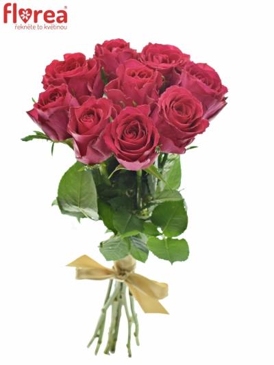Kytice 9 vínových růží MADAM CERICE 50cm