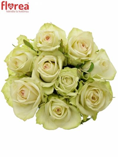 Kytice 9 zelených růží GREEN FASHION