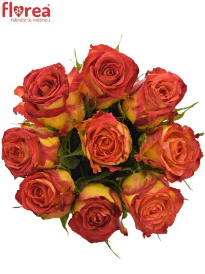 Kytice 9 žíhaných růží CATCH