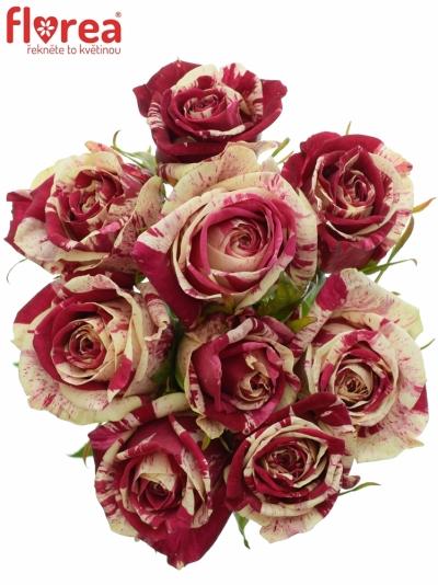 Kytice 9 žíhaných růží HARLEQUIN 50cm