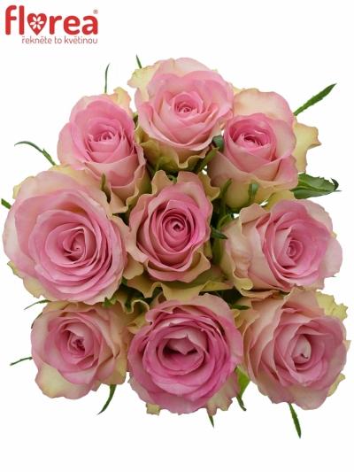Kytice 9 žíhaných růží LOVELY JEWEL 50cm
