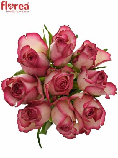 Kytice 9 žíhaných růží MYSTELLE 50cm