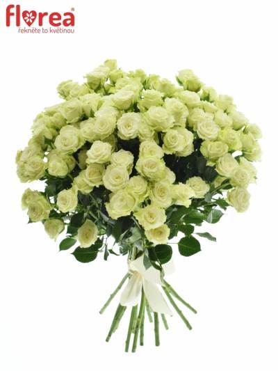 Kytice růží 100 - 120 květů GREEN GLOW 50cm