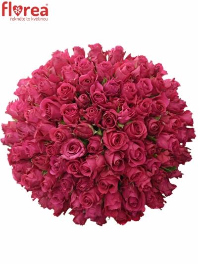 Kytice100 růžových růží ISADORA 40cm