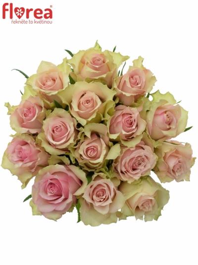 Kytice15 smetanových růží DREAMLAND 60cm