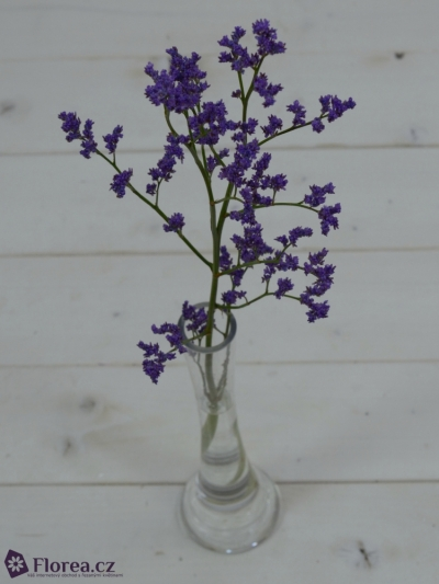 LIMONIUM MICHIGAN BLUE 75cm/30g